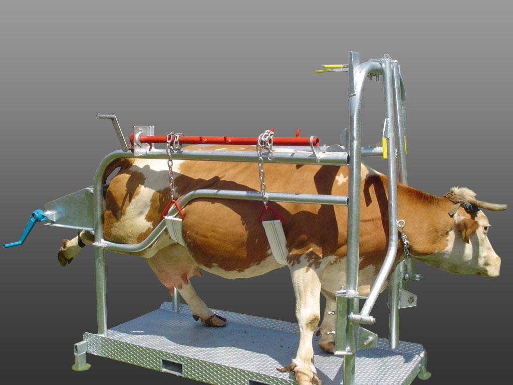 станки для фиксации коров фото после того